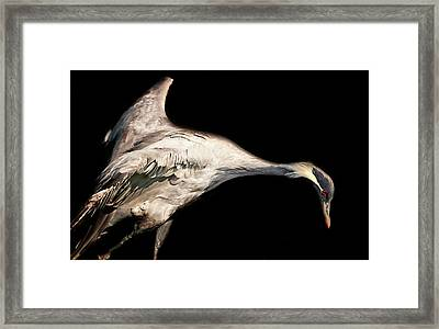 Ready For Takeoff Framed Print by Martin Newman