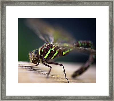 Ready For Takeoff Framed Print by Sherman Perry