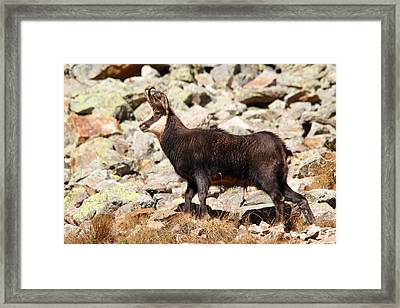Framed Print featuring the photograph Ready For The Challenge by Richard Patmore