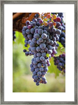 Ready For The Crush Framed Print