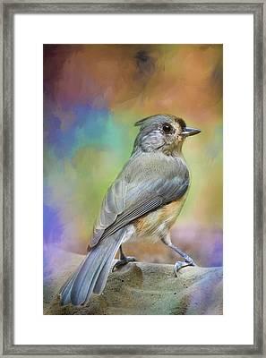 Ready For The Morning Bath Songbird Art Framed Print by Jai Johnson