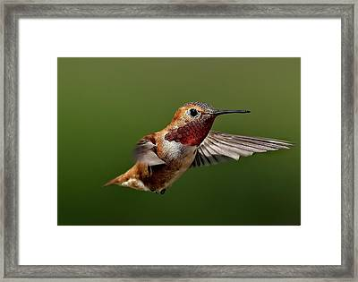 Ready Framed Print by Sheldon Bilsker