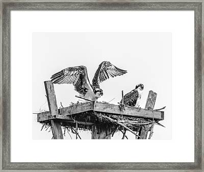 Ready To Fly Bw Framed Print
