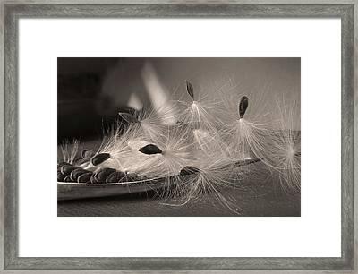 Ready To Fly Framed Print by Deborah Smith