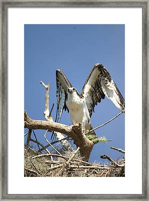 Ready To Fly Framed Print by Jack Norton