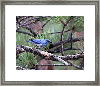 Ready To Fly Framed Print