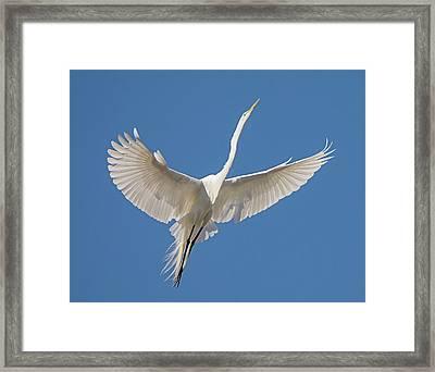 Elegant Flight Framed Print