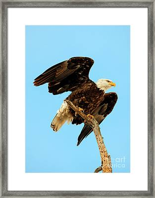 Ready To Fly Framed Print by Mike Dawson