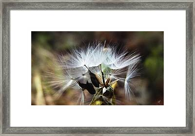 Ready To Fly... Salsify Seeds Framed Print