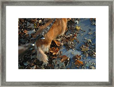 Ready To Go Framed Print by Brigid Nelson