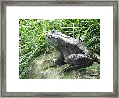 Ready To Jump Framed Print by Greg Boutz