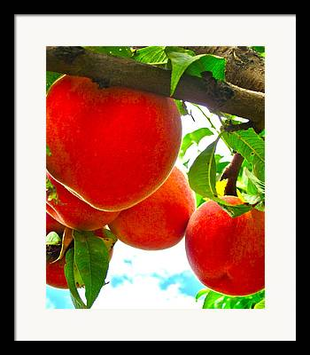 Peaches On A Tree Framed Prints