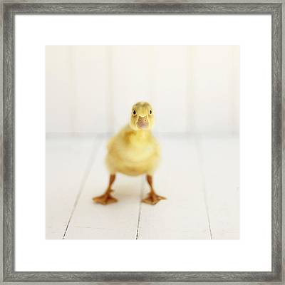 Framed Print featuring the photograph Ready To Rumble - Square Version by Amy Tyler