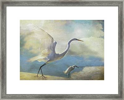 Ready To Soar Framed Print