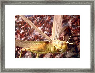Ready To Swarm Framed Print by Jez C Self