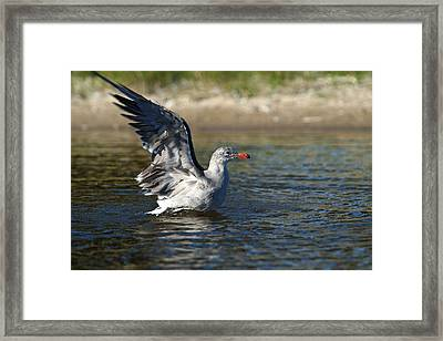 Ready To Take Off Framed Print