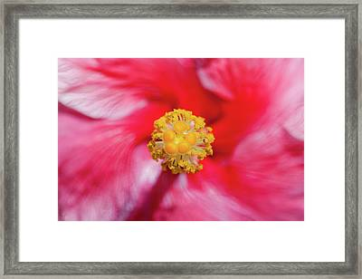 Ready To Tango Framed Print