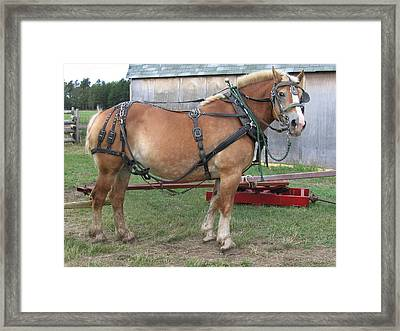 Ready To Work Framed Print by Laurie With