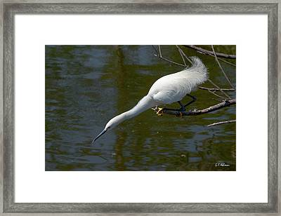 Ready..set.. Framed Print by Christopher Holmes