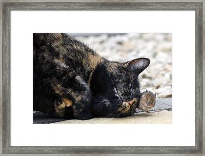Real Life Tom And Jerry Framed Print