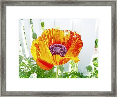 Real Framed Print by Lindsay Felty