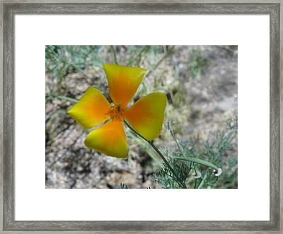 One Gold Flower Living Life In The Desert Framed Print