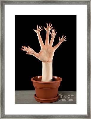Real Palm Tree Framed Print by Igor Kislev
