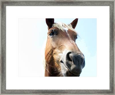 Really Framed Print by Amanda Barcon