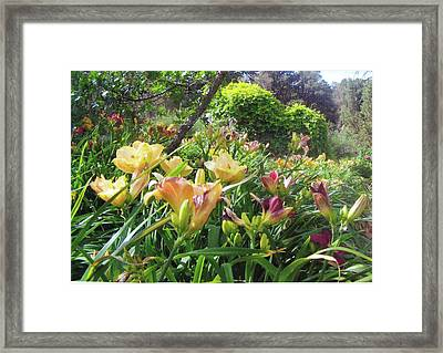 Really Big Bunch Of Lilies Framed Print by P Maure Bausch
