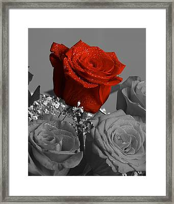 Really Red Rose Framed Print by M K  Miller