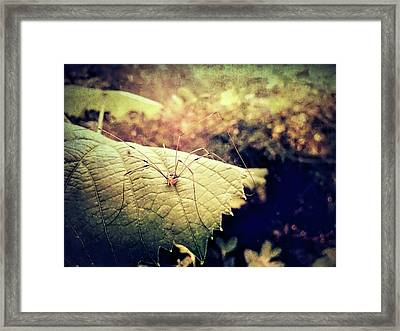 Realm Of The Harvestman Framed Print by Susan Maxwell Schmidt