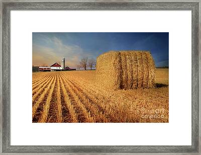 Reap The Harvest Framed Print