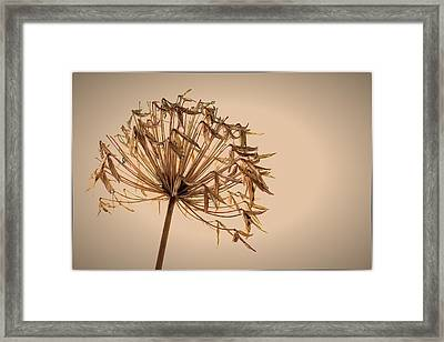 Framed Print featuring the photograph Reap What You Sow by Tim Nichols