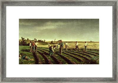 Reaping Sainfoin In Chambaudouin Framed Print by Pierre Edmond Alexandre Hedouin