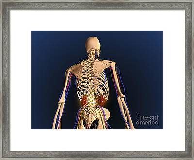 Rear View Of Human Skeleton Showing Framed Print