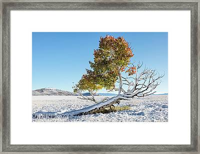 Reclining Tree With Snow Framed Print