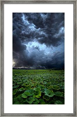 Reclusive Framed Print by Phil Koch