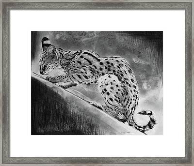 Recoil - Serval Framed Print by Susie Gordon