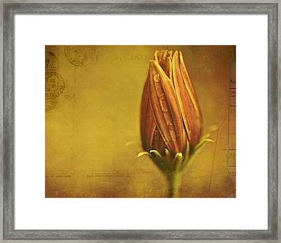 Framed Print featuring the photograph Recollection by Bonnie Bruno
