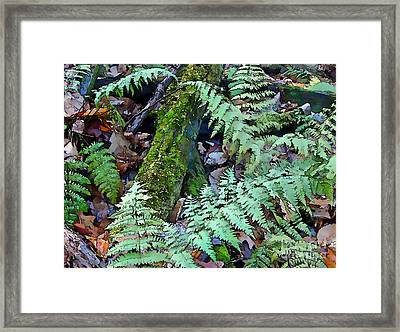 Record Warmth Framed Print by Betsy Zimmerli