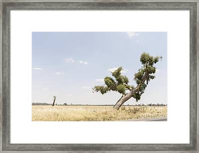 Recovery Framed Print by Linda Lees