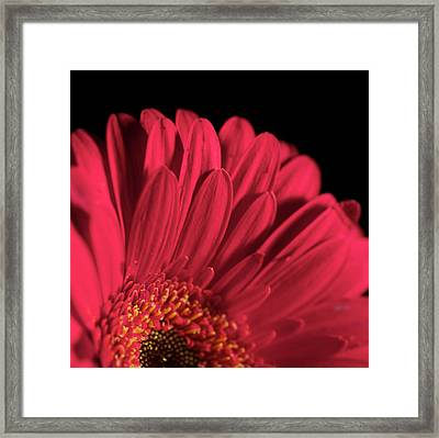 Red 4 Framed Print by Sheryl Thomas