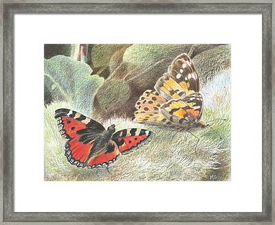 Red Admiral And A Painted Lady Framed Print by Maureen Carter