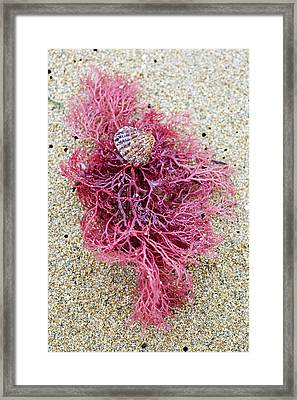 Framed Print featuring the photograph Red Algae by Frank Tschakert