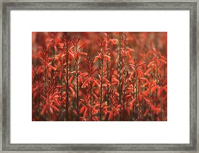 Red Aloe Abstract  Framed Print by Saija Lehtonen