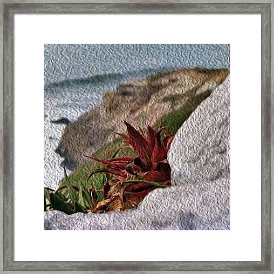 Red Aloe Vera By The Sea Framed Print
