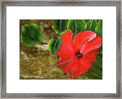 Red Amapola Framed Print by Maria Williams