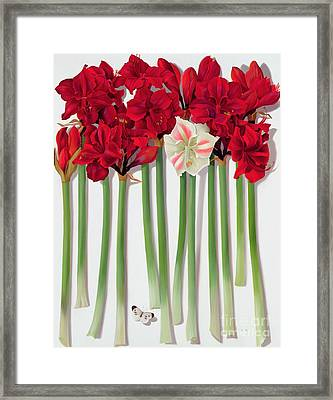 Red Amaryllis With Butterfly Framed Print by Lizzie Riches
