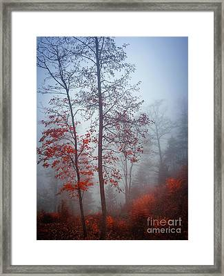 Framed Print featuring the photograph Red And Blue by Elena Elisseeva