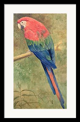 Macaw Paintings Framed Prints